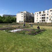 InfoFotos_Gartenaktivitäten9