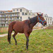 InfoFotos_Pferd5