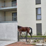 InfoFotos_Pferd6